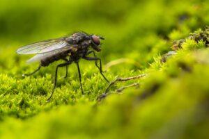 rouwvliegjes bestrijden