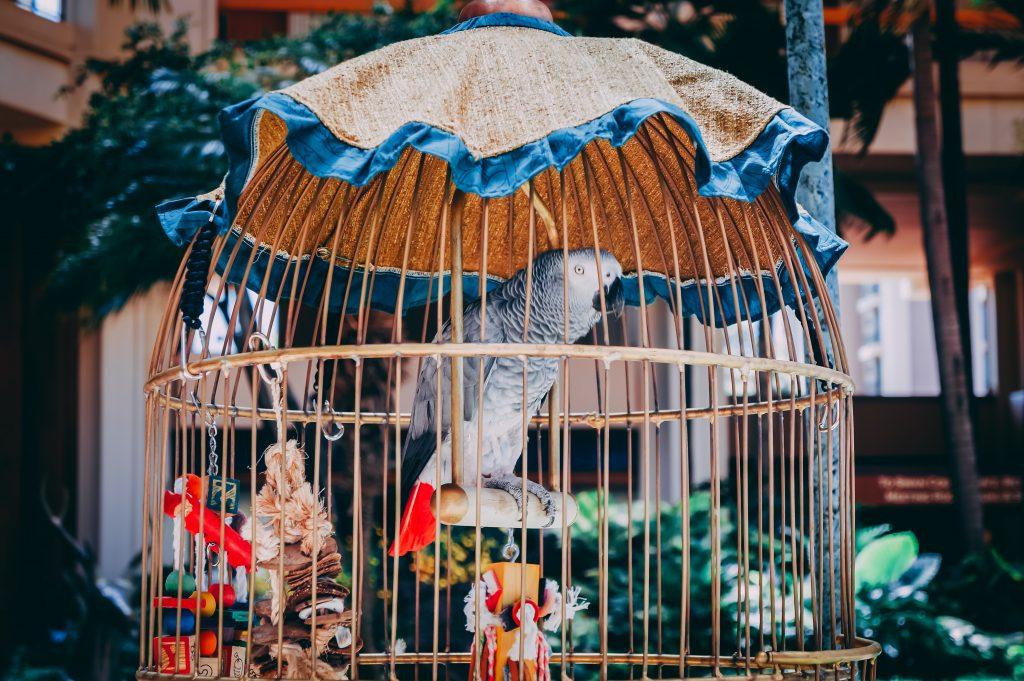 vogelslingers
